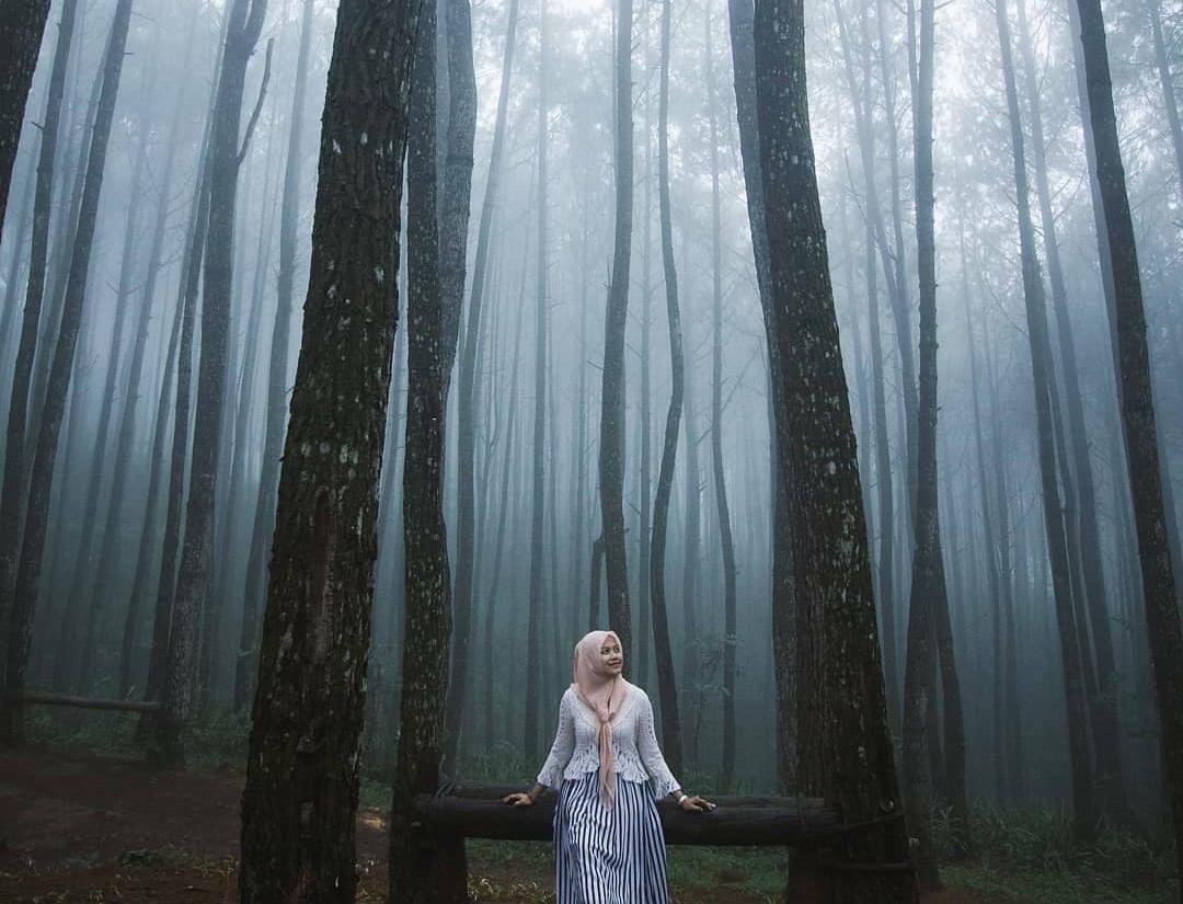 wisata hutan pinus jogja