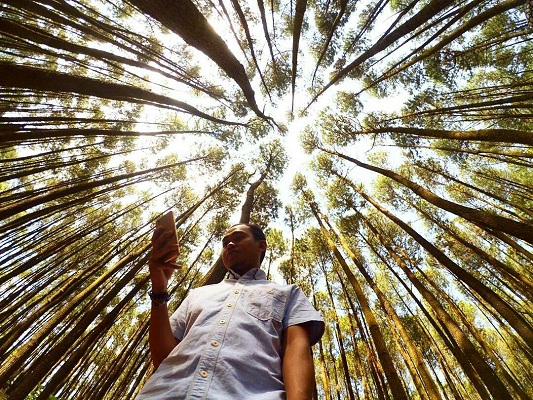 lokasi hutan pinus mangunan